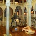 Le Musée des Miniatures à Lyon